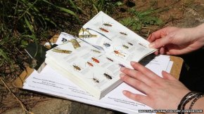 Citizen Science Projects – How you can get involved!