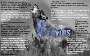 The 'big badwolf'?
