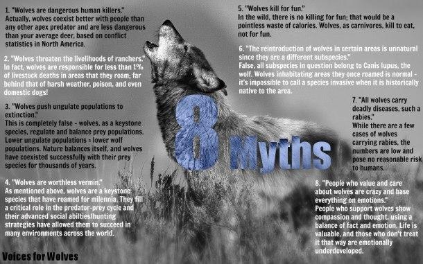 The 'big bad wolf'?