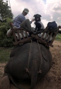 Locating wild Asian elephant dung in Myanmar ©S.Hedges/WCS