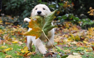 dog-leave-nature-pet-puppy-Favim.com-46670