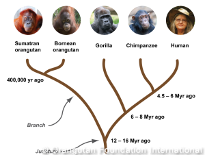 great_ape_tree_crop-300x226