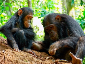 ©The Jane Goodall Institute 2013