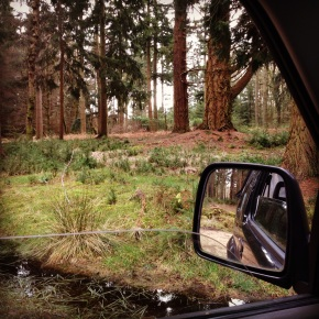 Wordless Wednesday #2. The New Forest (Hampshire, UK)