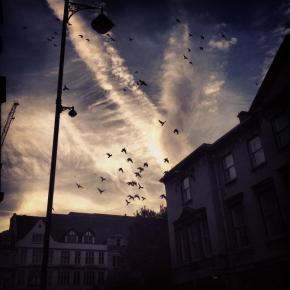 Wordless Wednesday #8. Birds of Broad Street (Oxford, UK).