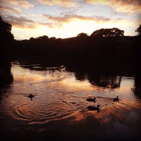 Wordless Wednesday #10. Sunset Ducks on the River Fowey (Cornwall, UK)