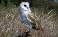 ©World Owl Trust 2014