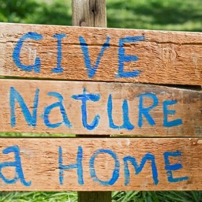 Mindful Monday #5. If There Are No Homes for Nature, There Will Be No Nature