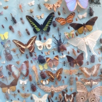 butterflywall