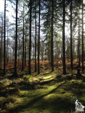 Wordless Wednesday #25. The Forest of Dean
