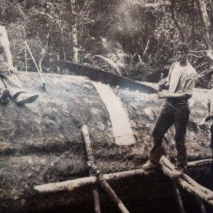 Kauri logging ©travellerspoint