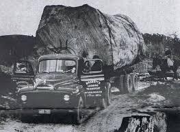 Kauri logging ©woodyone.co.nz