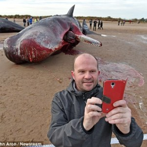 the dead whale selfie inappropriate or harmless howl. Black Bedroom Furniture Sets. Home Design Ideas