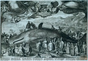 The Dead Whale Selfie: #inappropriate or#harmless?