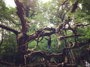 Wordless Wednesday #27. Exploring Home (The New Forest,Hampshire)